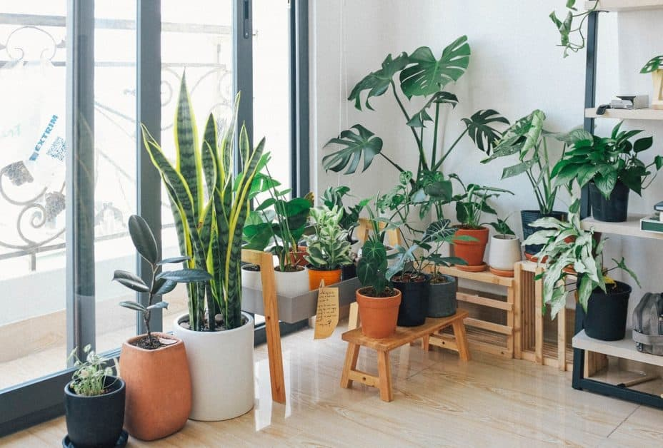 house plants in different sizes