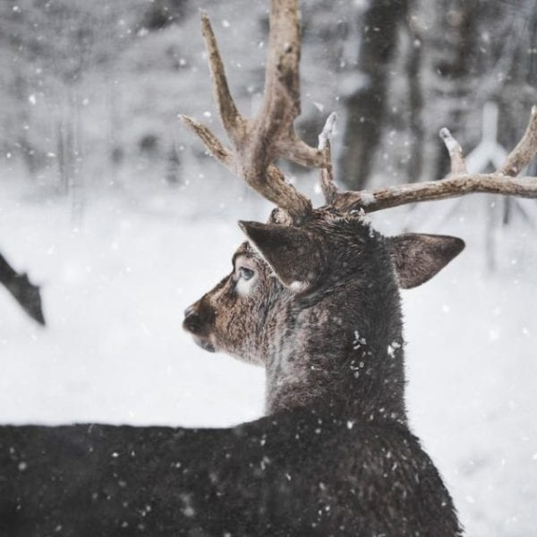 dare in the wildlife with snow